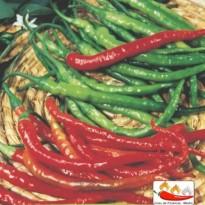 Semente de Pimenta Cayenne (Long Slin) Feltrin Sementes
