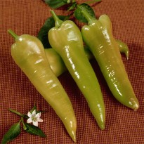 Semente de Pimenta Doce Comprida (Long Sweet Pepper) Feltrin Sementes