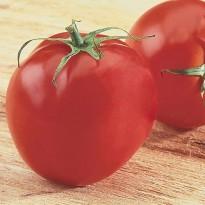 Semente de Tomate Santa Clara Feltrin Sementes