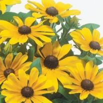 Semente de Margarida Amarela Rudbeckia Feltrin Sementes