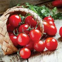 Semente de Tomate Cereja Vermelho (Yubi) Feltrin Sementes