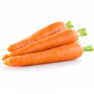 Semente de Cenoura Verão Feltrin Sementes